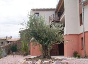 Oliviers dans le jardin d'hôtel design le Minervois à coté de Carcassonne