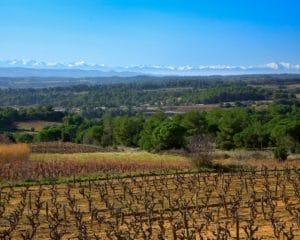 Vignobles Minervois dans l'Aude, Occitanie