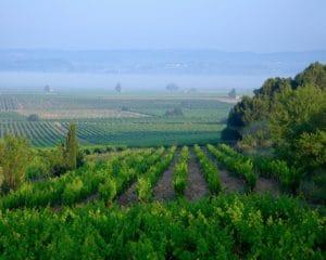 vignobles autour de l'hôtel La Marbrerie, séjour en Minervois